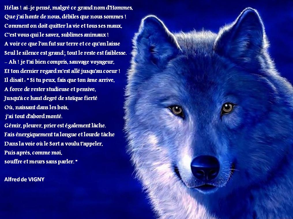 Commentaire Composé Sur La Mort Du Loup De Vigny